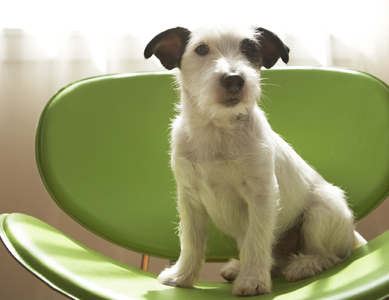 dog sitting on green chair