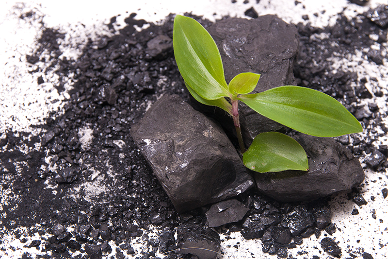 new plant growing out of coal